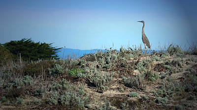 Photograph - Great Blue Heron by Joyce Dickens