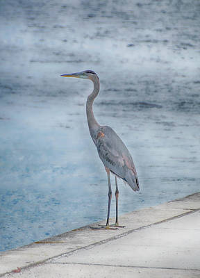 Photograph - Great Blue Heron by Judy Hall-Folde