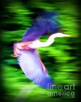 Photograph - Great Blue Heron by Judy Via-Wolff