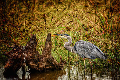 Photograph - Great Blue Heron by Kathi Isserman