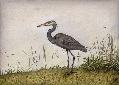 Herons Drawing - Great Blue Heron by Lorrie Cerrone