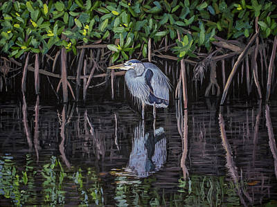 Painting - Great Blue Heron  by Manuel Lopez