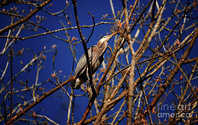 Photograph - Great Blue Heron Nesting 2017 - 1 by Terry Elniski