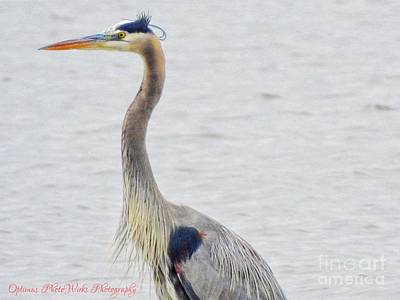 Photograph - Great Blue Heron Of Virginia by Frank Williams