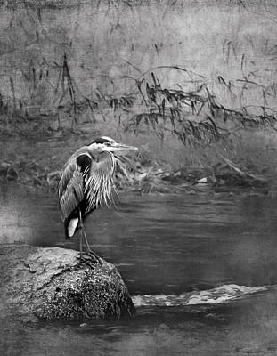 Photograph - Great Blue Heron On A Rock Bw by Belinda Greb
