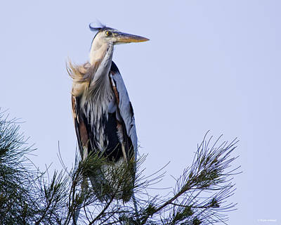 Animal Portrait Photograph - Great Blue Heron On A Windy Day by Roger Wedegis