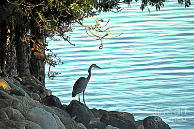 Photograph - Great Blue Heron On Elk Lake by Lydia Holly