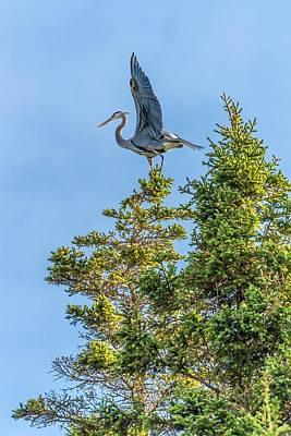 Monhegan Photograph - Great Blue Heron On Monhegan by Tim Sullivan