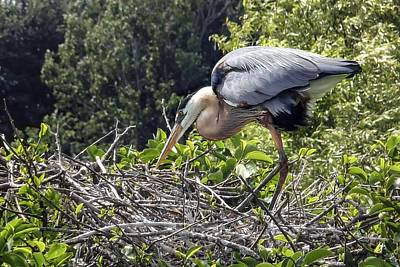 Doug Gray Photograph - Great Blue Heron On Nest by NaturesPix
