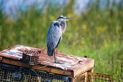 Photograph - Great Blue Heron On Tractor by Fran Gallogly