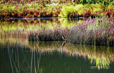 Photograph - Great Blue Heron by Paul Mashburn