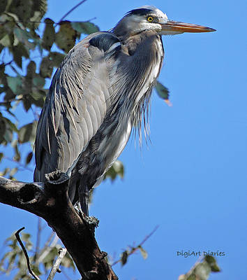 Great Blue Heron Perched Art Print by DigiArt Diaries by Vicky B Fuller