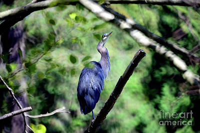 Photograph - Great Blue Heron Perched Up High by Terry Elniski