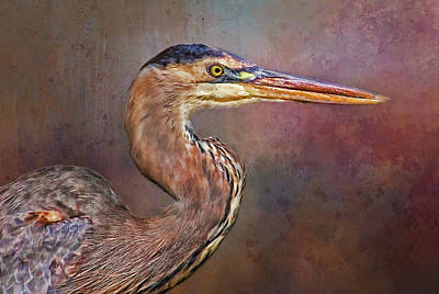 Photograph - Great Blue Heron Portrait 2 by HH Photography of Florida