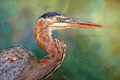 Photograph - Great Blue Heron Portrait  by HH Photography of Florida