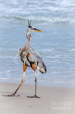 Photograph - Great Blue Heron Posing With Style by Debra Martz