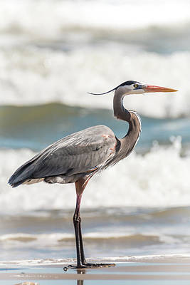 Photograph - Great Blue Heron Profile by Patti Deters