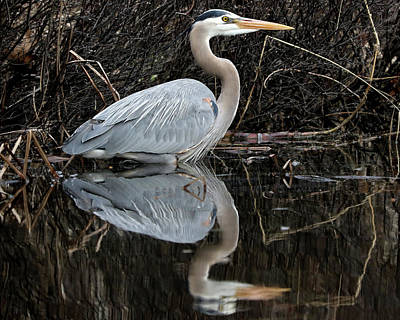 Photograph - Great Blue Heron Reflection 2 by Doris Potter