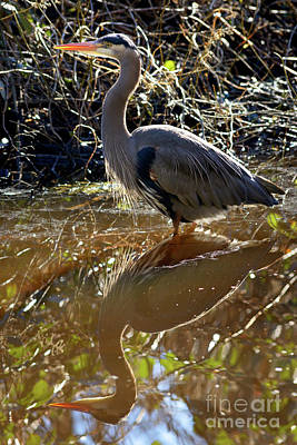 Photograph - Great Blue Heron Reflection by Terry Elniski