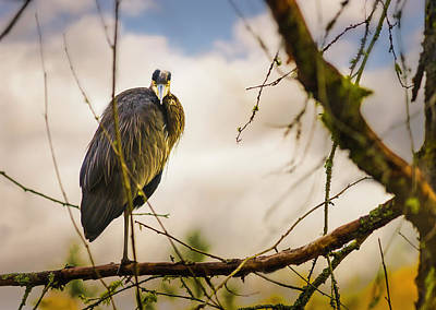 Photograph - Great Blue Heron Sunset Perch by Peter V Quenter
