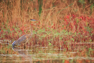 Photograph - Great Blue Heron by Susan Rissi Tregoning
