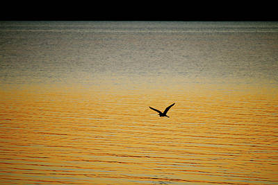 Photograph - Great Blue Heron Takes Flight by Art Block Collections