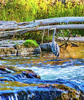 Photograph - Great Blue Heron - The Hunter 2 by Steve Harrington