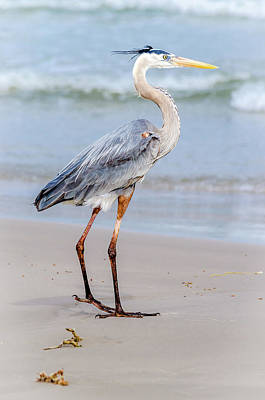 Photograph - Great Blue Heron - The Poser by Debra Martz