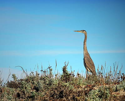 Photograph - Great Blue Heron Two Cropped by Joyce Dickens