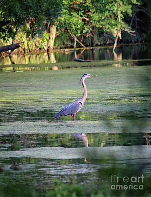 Photograph - Great Blue Heron Vertical by Karen Adams