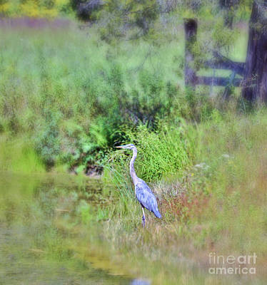 Photograph - Great Blue Heron Visitor by Kerri Farley