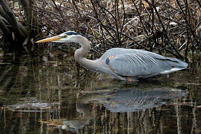 Photograph - Great Blue Heron Wading by Doris Potter