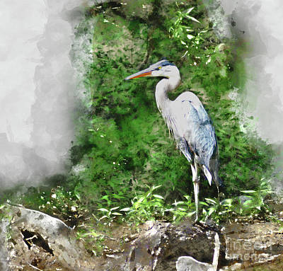 Digital Art - Great Blue Heron Watercolor by Kathy Kelly