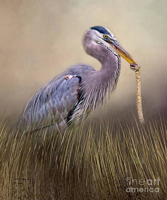 Photograph - Great Blue Heron With Lunch by Bill And Deb Hayes