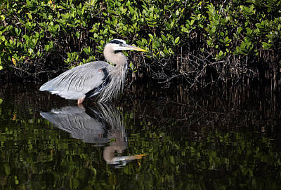 Photograph - Great Blue Heron With Reflection by Jean Clark