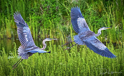 Photograph - Great Blue Herons by David A Lane