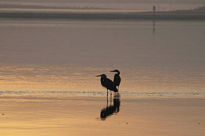 Photograph - Great Blue Herons In The Bay by Robert Banach