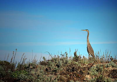 Photograph - Great Blue by Joyce Dickens
