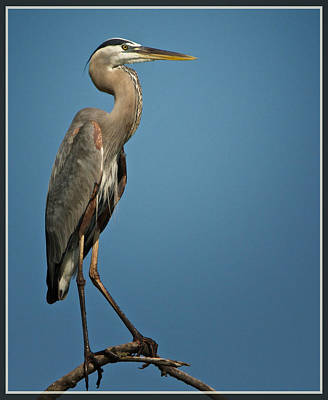 Photograph - Great Blue by Linda Shannon Morgan