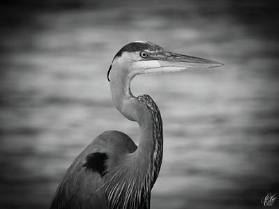 Photograph - Great Blue, No. 39 by Elie Wolf