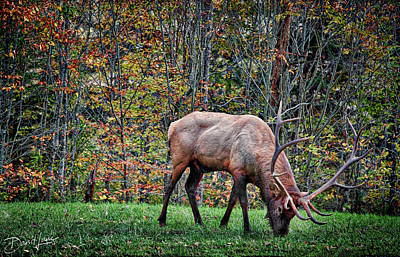 Photograph - Great Bull Elk by David A Lane