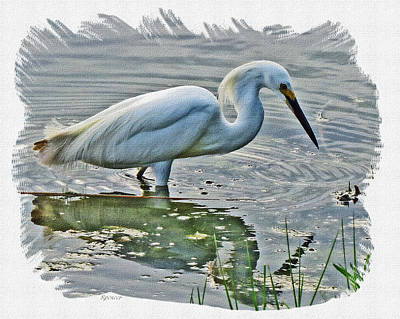 Photograph - Great Egret 1157-2 by T Guy Spencer