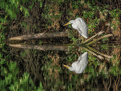 Photograph - Great Egret 5525-040918-2h by Tam Ryan