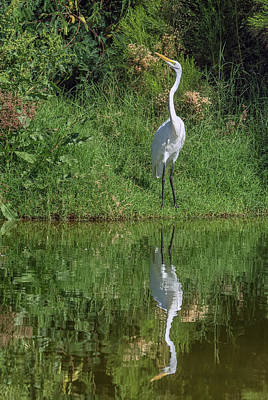 Photograph - Great Egret 5623-040918-3 by Tam Ryan