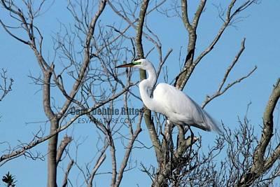 Photograph - Great Egret 8818 by Captain Debbie Ritter
