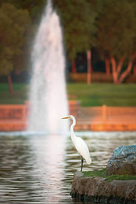 Photograph - Great Egret by Adam Rainoff