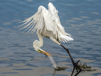 Photograph - Great Egret And Fish 6636-120117-1cr by Tam Ryan