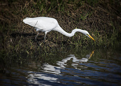 Photograph - Great Egret And Reflection by Robert Potts