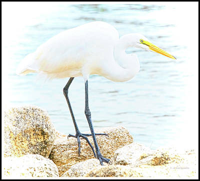 Photograph - Great Egret, Animal Portrait by A Gurmankin
