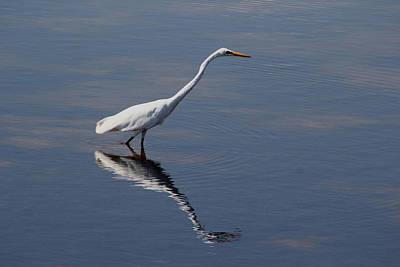 Photograph - Great Egret by April Wietrecki Green